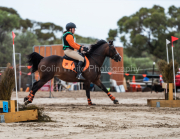 horse-CW-0683-_CLW7442