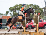 horse-CW-0685-_CLW7444