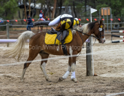 horse-CW-0688-_CLW9276