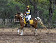 horse-CW-0693-_CLW9286