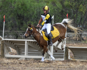 horse-CW-0696-_CLW9294