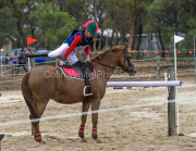 horse-CW-0705-_CLW9324