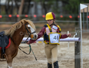 horse-CW-0734-_CLW9433