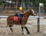horse-CW-0735-_CLW9436