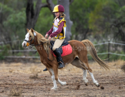 horse-CW-0741-_CLW9449