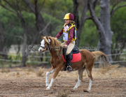 horse-CW-0742-_CLW9450