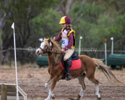 horse-CW-0743-_CLW9452