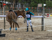 horse-CW-0753-_CLW9483