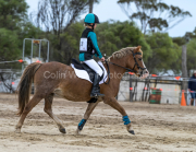horse-CW-0765-_CLW9517