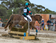horse-CW-0767-_CLW9520