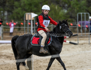 horse-CW-0774-_CLW9535