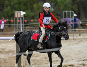 horse-CW-0775-_CLW9536