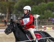 horse-CW-0776-_CLW9539