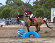 horse-CW-0778-_CLW9545