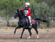 horse-CW-0782-_CLW9550