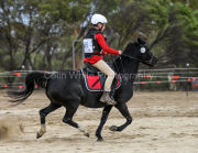 horse-CW-0788-_CLW9569