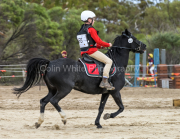 horse-CW-0789-_CLW9571