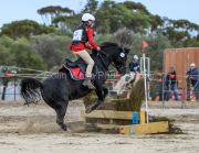 horse-CW-0790-_CLW9579