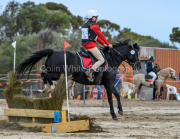 horse-CW-0792-_CLW9581