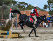 horse-CW-0793-_CLW9582