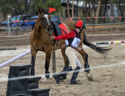 horse-CW-0794-_CLW9584