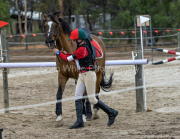 horse-CW-0795-_CLW9585