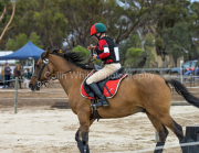 horse-CW-0797-_CLW9587