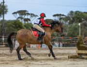 horse-CW-0807-_CLW9617