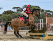 horse-CW-0808-_CLW9619