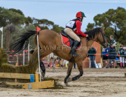 horse-CW-0811-_CLW9622