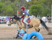 horse-CW-0813-_CLW9640