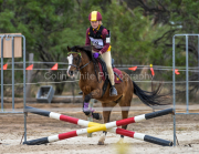 horse-CW-0818-_CLW9657
