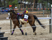 horse-CW-0822-_CLW9663