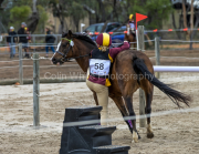 horse-CW-0823-_CLW9666