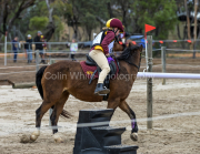 horse-CW-0824-_CLW9667