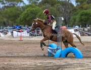horse-CW-0827-_CLW9688