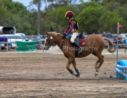 horse-CW-0829-_CLW9690