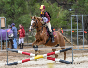 horse-CW-0833-_CLW9703