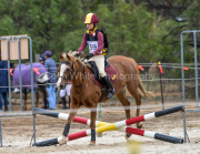 horse-CW-0834-_CLW9704