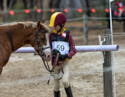 horse-CW-0835-_CLW9707