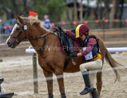 horse-CW-0836-_CLW9709