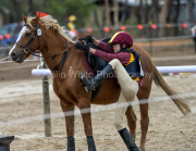 horse-CW-0837-_CLW9710