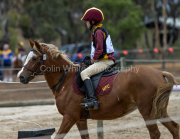 horse-CW-0838-_CLW9713