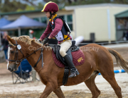 horse-CW-0839-_CLW9714