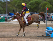 horse-CW-0842-_CLW9721