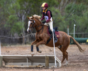 horse-CW-0844-_CLW9729
