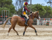 horse-CW-0849-_CLW9749