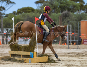 horse-CW-0851-_CLW9752