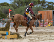 horse-CW-0852-_CLW9753