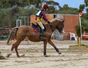 horse-CW-0853-_CLW9754